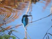 昭和記念公園でバードウオッチング 日本野鳥の会奥多摩支部が初心者向けに
