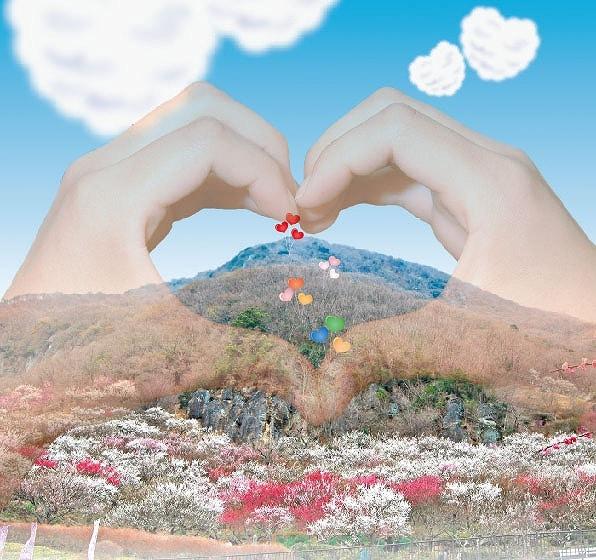 湯河原の梅林で「梅コン」 梅を楽しみながら恋愛成就