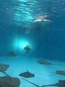 大分の水族館で「マリンサイエンス~海の科学展~」 水中ロボットの操作体験人気に