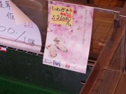 隠岐・海士町で「いわがき春香」出荷開始 今年も「実入りよし」