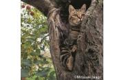 そごう大宮店で「岩合光昭写真展 ふるさとのねこ」 一般募集の猫写真展も