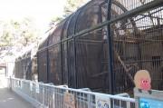 大宮小動物園サル舎リニューアルで部分閉園 カピバラ舎へは迂回路も