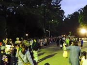 大宮氷川神社でホタル観賞会 ホタル自生目指す 参道で「氷川マルシェ」も