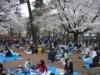 老齢化が進む桜を守れ-名所「大宮公園」が桜守ボランティア募集