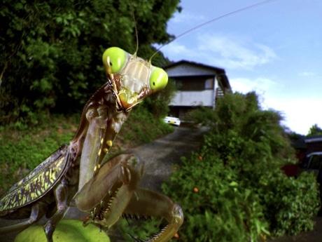 昆虫視点の写真、約100点を展示-写真家・栗林慧さんの写真展 ...