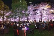 東京ミッドタウンで花見イベント スパークリングワインや桜スイーツ