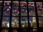 東京タワーで「夜桜」の3Dマッピング 東京の夜景を背景に舞い散る桜