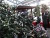 大船渡で「つばきまつり」開催 3月まで500種以上が順次開花