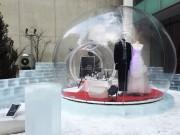 札幌のホテル前にバブルツリーテント 日本で初めて一般公開