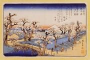 江戸東京たてもの園で「小金井の桜」 江戸の桜と風俗を紹介
