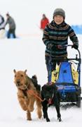 犬は喜び庭駆け回る 赤城山で「犬ぞりレース」犬ぞり体験、ポメ出場実績も