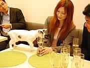 今泉に猫カフェ「キューリグ」2号店-保護猫のみ20匹常駐、譲渡も