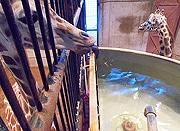 福岡市動物園で「バックヤードからの写真展」 人気投票も