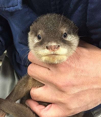 福岡市動物園で「バックヤードからの写真展」 飼育員らが撮影
