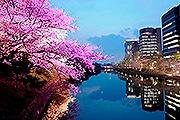 城壁をライトアップする「福岡城さくらまつり」 さくらグルメ屋台も