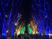 冬の風物詩「つくば光の森」始まる―イルミネーション点灯