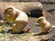 上野動物園で動物の赤ちゃん誕生ラッシュ-プレーリードック、ニホンザルなど