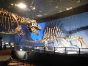 上野・科博で「恐竜博2016」 スピノサウルスとティラノサウルスが「夢の競演」