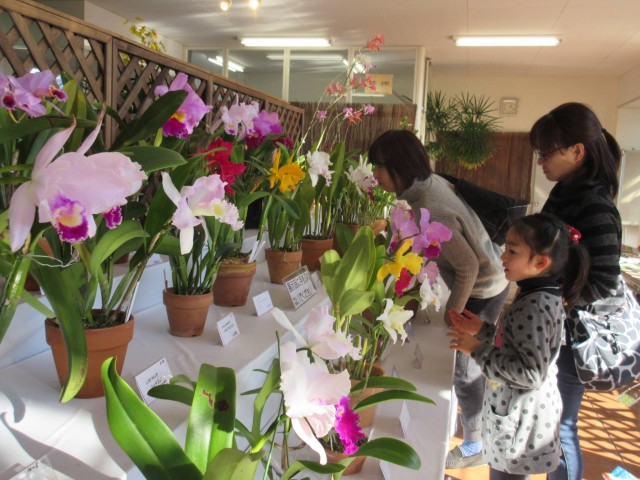 東浦和の園芸植物園で洋ラン展 愛好家が丹精込めて育てた280株ズラリ