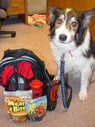 「ペットの緊急避難準備、できていますか」 BC州の動物保護団体が確認呼び掛け