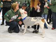 保護犬60匹が新しい家族探し カリフォルニアからバンクーバーへ到着
