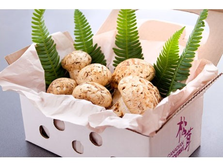 NaviTOUR Started to Deliver Matsutake Made in Canada ― Straight to Japan