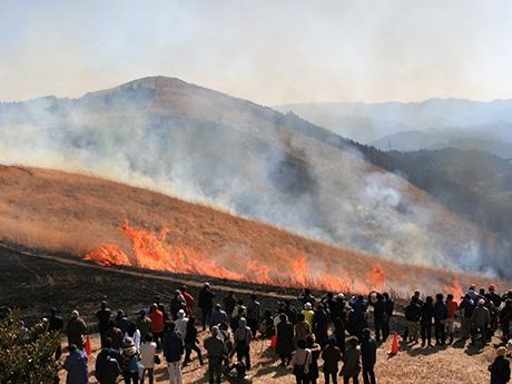 和歌山・生石山で恒例の「山焼き」 炎に歓声、ススキ保全に町役場と住民が協力