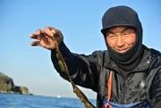 横須賀沖で収獲、猿島産わかめの若葉「さるひめ」が好評