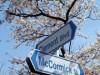 横須賀、米海軍基地開放が一般開放 「日米親善スプリングフェスタ」