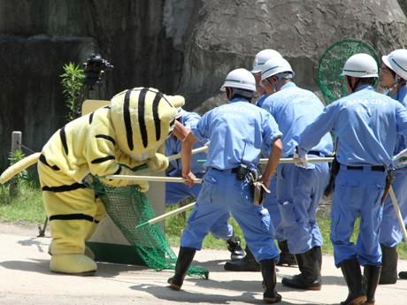 天王寺動物園で「トラの脱走」を想定した訓練が行われた