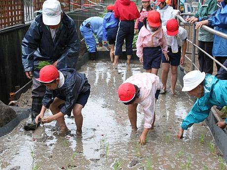 天王寺動物園で天王寺小学校の児童が田植え