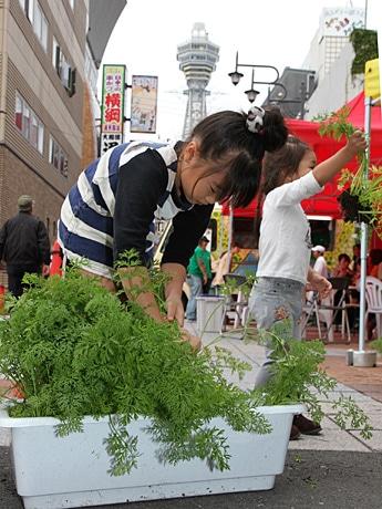 新世界で子どもが野菜の収穫体験