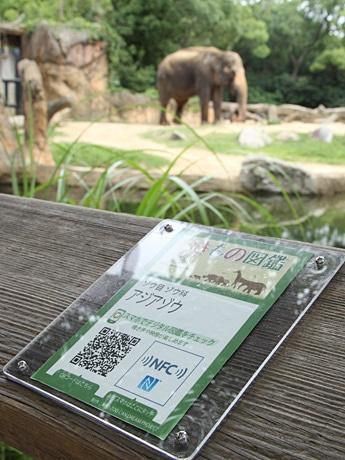 アジアゾウの飼育場所に掲出しているNFCポスター