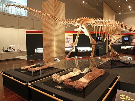 特別展「スペイン 奇跡の恐竜たち」の会場