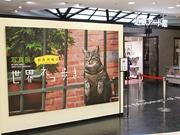 あべのハルカスで写真展「岩合光昭の世界ネコ歩き」 トークショーも
