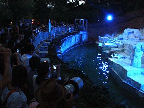 天王寺動物園のナイトZOO(昨年の様子)