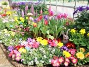長居植物園で「早春の草花展」 みどりのトンネルに80種超
