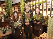 天王寺に野菜とハーブの種と苗の専門店 赤松種苗の新業態