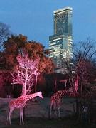 天王寺動物園で「夏のナイトZOO」 金曜・土曜中心に開催へ
