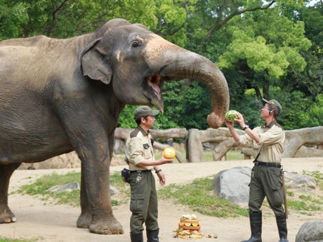 飼育スタッフが持つメロンなどを見て口を開けるラニー博子