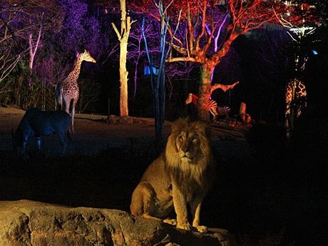 夜のアフリカサバンナゾーン(3月10日の内覧会で)