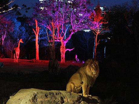 天王寺動物園でナイトZOO(3月に開催されたイースターナイトZOOの様子)