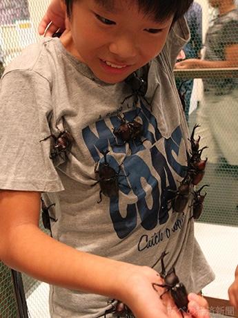 カブトドームでたくさんのカブトムシを服に付けた男児