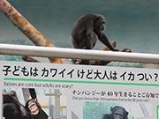 天王寺動物園、チンパンジーなどの看板を大阪らしく「面白く」刷新