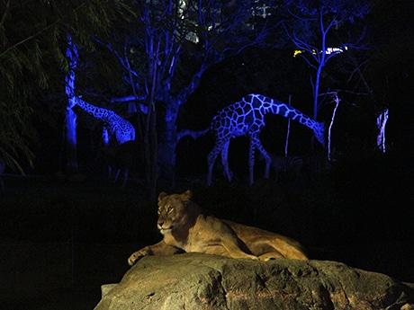 天王寺動物園でナイトZOO(写真=夏開催時の様子)