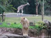天王寺動物園で「ドリームデイ・アット・ザ・ズー」 障がい者と家族を無料招待