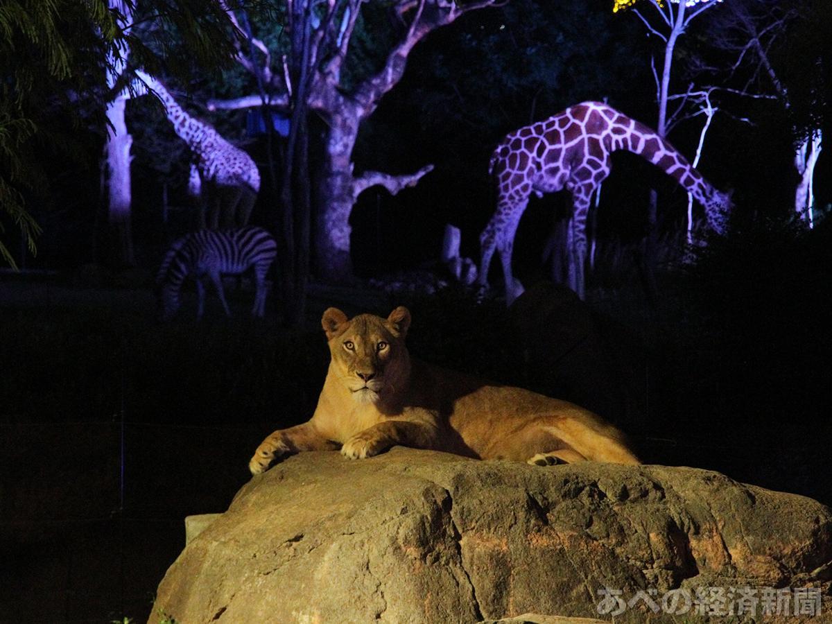 天王寺動物園「ナイトZOO」(昨年の様子)