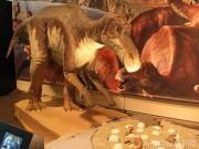 大阪市立自然史博物館で特別展「恐竜の卵」 卵の化石や全身骨格を展示