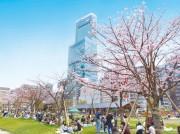 天王寺公園「てんしば」と「あべちか」で春イベント 桜の増殖も
