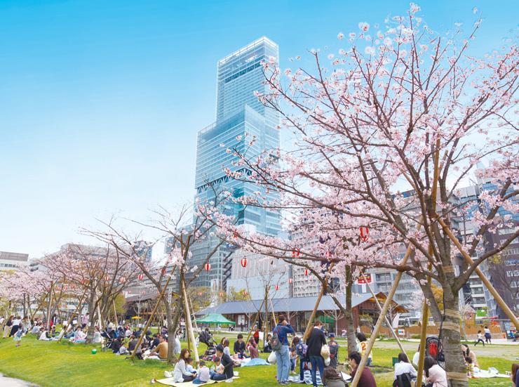 天王寺公園「てんしば」の桜(イメージ)